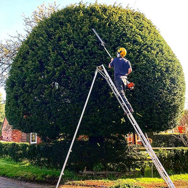 CJ Tree Surgeons Harborne
